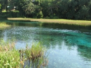 An Ecosystem-Level Study of Florida's Springs – Florida Fish and Wildlife Conservation Commission