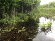 New River Swamp Wetlands Mitigation Site - Beaufort-Jasper Water and Sewer Authority