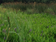 Kanapaha Infiltrating Wetland Demonstration Project - Gainesville Regional Utilities (GRU)
