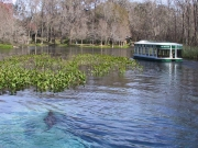 Silver Springs 50-Year Retrospective Study – St. Johns River Water Management District (SJRWMD)
